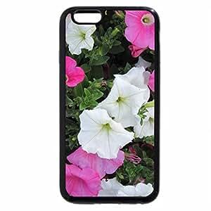 iPhone 6S Plus Case, iPhone 6 Plus Case, Flowers in Hanging Basket 19