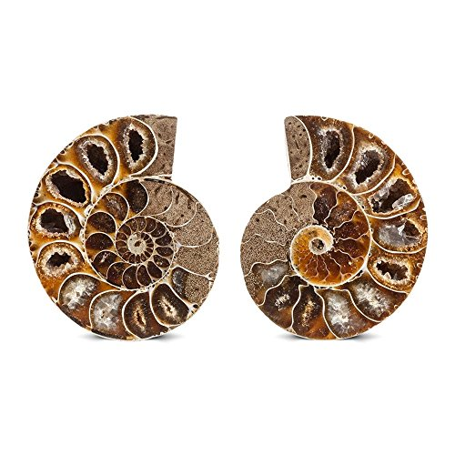 (KALIFANO Extinct Natural Ammonite Shell Pair Fossil Stone - Madagascar)