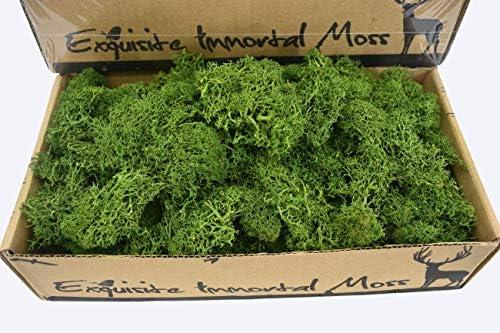 Nature Moss Grass for Home Decor, Flowers Items, Essential