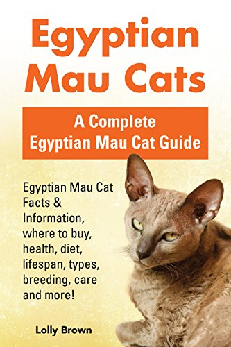 egyptian mau cats egyptian mau cat facts information where to