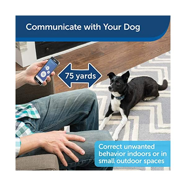 PetSafe-SMART-DOG-Training-Collar--Uses-Smartphone-as-Handheld-Remote-Control--Tone-Vibration-1-15-Levels-of-Static-Stimulation--Bluetooth-Wireless-System--All-in-One-Pet-Training-Solution