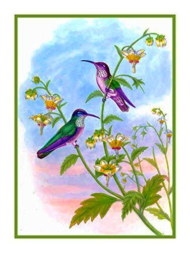 - Orenco Originals White Breast Hummingbird Naturalist Gould Birds Counted Cross Stitch Pattern