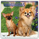 Chihuahuas 2018 12 x 12 Inch Monthly Square Wall Calendar with Foil Stamped Cover, Animals Small Dog Breeds Puppies (Multilingual Edition)