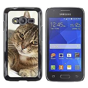 Print Motif Coque de protection Case Cover // M00125962 Retrato del gato felino Animal // Samsung Galaxy Ace4 / Galaxy Ace 4 LTE / SM-G313F