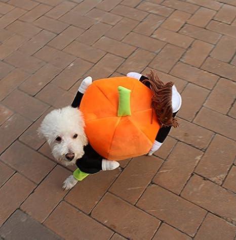 amazoncom tiaobug pet dog cat carrying pumpkin halloween party fancy costume jacket apparel medium pet supplies