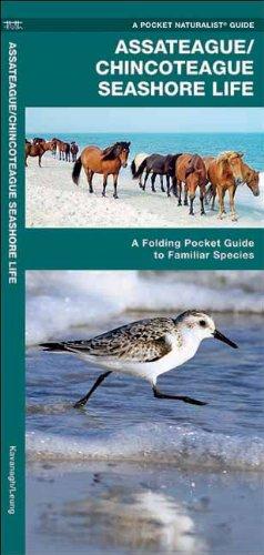 Assateague/Chincoteague Seashore Life: A Folding Pocket Guide to Familiar Species (Pocket Naturalist Guide Series)