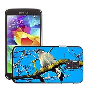 Etui Housse Coque de Protection Cover Rigide pour // M00130107 Vivo solo aviar pico Animal // Samsung Galaxy S5 S V SV i9600 (Not Fits S5 ACTIVE)
