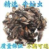 The Chinese herbal medicine insect flies cattle cattle cattle on insect insect gadfly bull free oestrus bug powder 250 grams