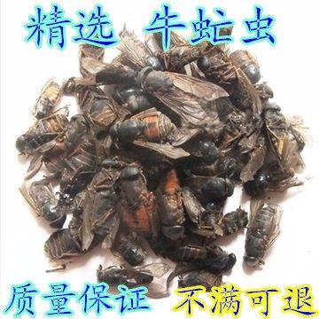 The Chinese herbal medicine insect flies cattle cattle cattle on insect insect gadfly bull free oestrus bug powder 250 grams by Guangxi Paoyi Jiancai LTD