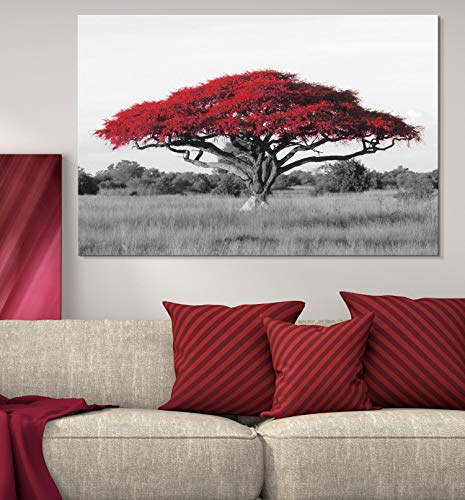 Pop of Red Color Acacia Treetop on Black and White African Savanna Background