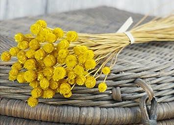 Vasyle Art Naturel Fleurs Sechees Fleurs Artificielles Sechees