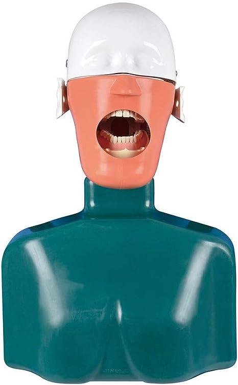 D&F Dental Fantasma ManiquíCabeza Resina Simulador Sistema Unidad ...