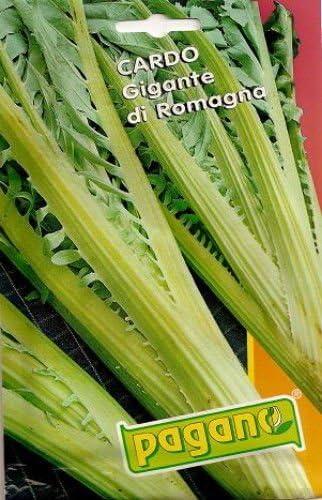 Cardo Gigante di Romagna-Romagna Cardon Seeds-4 grams