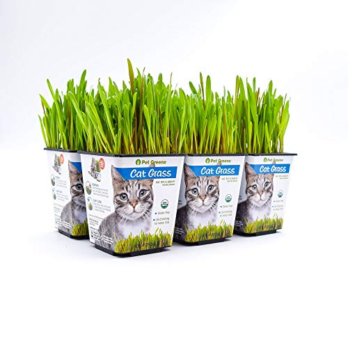 Bell Rock Growers Pet Greens Live House Pet Grass, 15 By 11 By 7-Inch, - Dog Rock Treat Bell