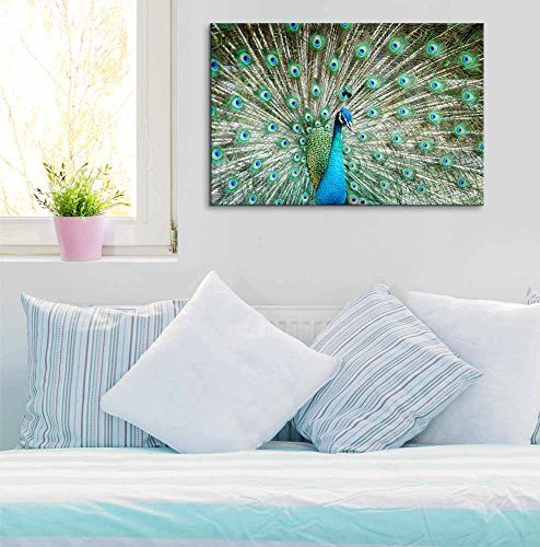 Peacock Showing Its Beautiful Feathers Spreading Its Tail Wall Decor