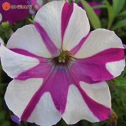 Images Nal Images Amazonimagesi512bczco