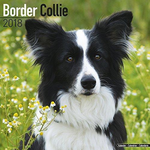 Border Collie Calendar 2018 - Dog Breed Calendar - Premium Wall Calendar 2017-2018