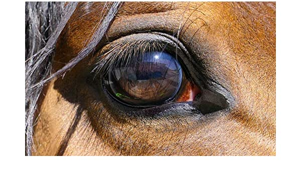 Amazon com: Photography Poster - Horse, Eye, Close-Up