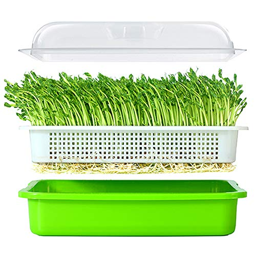 $13.99 Seed Sprouter Tray BPA Free PP Soil-Free Big Capacity Healthy Wheatgrass Grower with Lid Sprouting Kit 13.4×9.84×4.72in(LxWxH) 2019