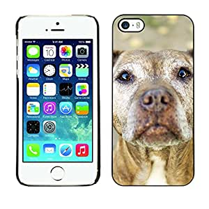 Vortex Accessory Carcasa Protectora Para APPLE iPHONE 5 / 5S - American Pit Bull Terrier Dog Canine -