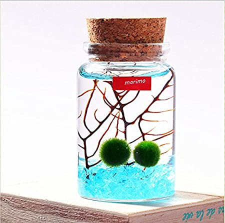 Newdreamworld Marimo Moss Ball In A Wishing Bottle Of Blue Sea Mini