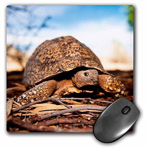 Finish Tortoise (3D Rose Closeup Of A Leopard Tortoise Fraserburg South Africa. Matte Finish Mouse Pad - 8 x 8 - mp_206529_1)