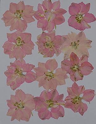 LoveDiyLife pink Larkspur real pressed dried flowers by LoveDiyLife