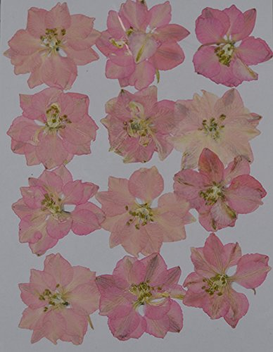 LoveDiyLife pink Larkspur real pressed dried flowers