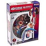 Famemaster 4D-Vision Human Male Reproductive Anatomy Model