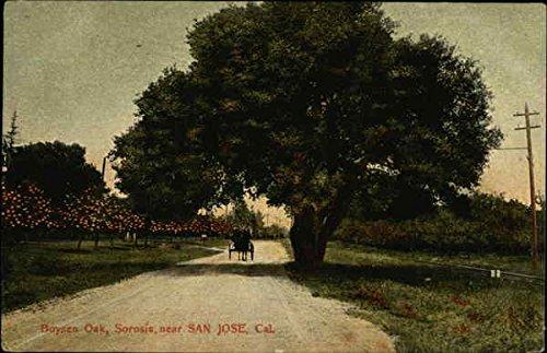 Boysen Oak, Sorosis San Jose, California