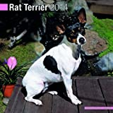 Rat Terrier 2014 Wall Calendar