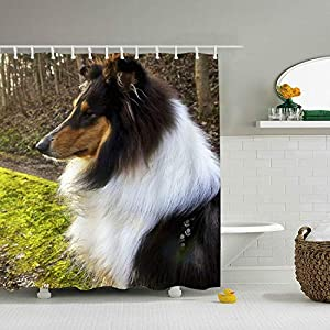 Rough Collie Shower Curtain, Extra Long Bath Decorations Bathroom Decor with Hooks Marriage Gifts for Men and Women in Art Print Polyester Fabric 65 x 72 inch 1
