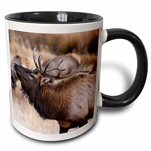 3dRose Danita Delimont - Deer - USA, Colorado, Estes Park, Rocky Mountain NP, Bull Elk or Wapiti - 15oz Two-Tone Black Mug (mug_206226_9)