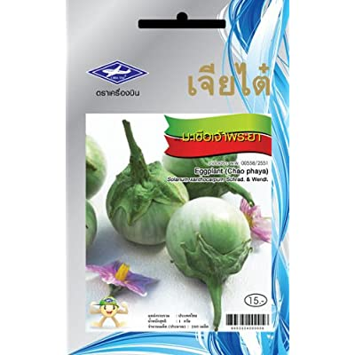 Chao Phaya Eggplant (240 Seeds) Seeds - 1 Package From Chai Tai, Thailand : Vegetable Plants : Garden & Outdoor
