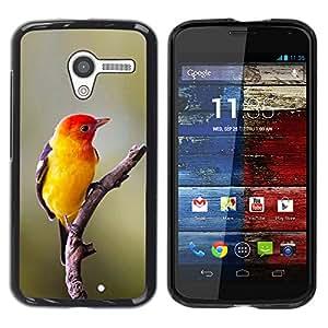 YOYOYO Smartphone Protección Defender Duro Negro Funda Imagen Diseño Carcasa Tapa Case Skin Cover Para Motorola Moto X 1 1st GEN I XT1058 XT1053 XT1052 XT1056 XT1060 XT1055 - amarillo ave canora aves naturaleza de primavera rama