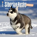 Siberian Husky Puppies 2018 7 x 7 Inch Monthly Mini Wall Calendar, Animal Dog Breeds Husky (Multilingual Edition)