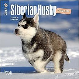 Siberian Husky Puppies 2018 Mini Wall Calendar Amazonde