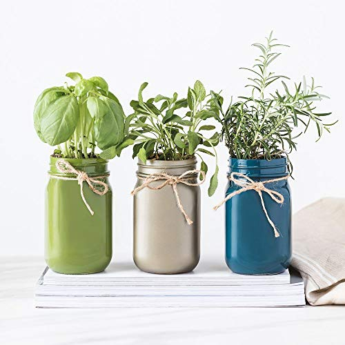 Thoughtfully Mason Jar Herb Garden | Contains Rosemary, Basil and sage Seeds with Soil pods to Grow Your own Herbs by Thoughtfully