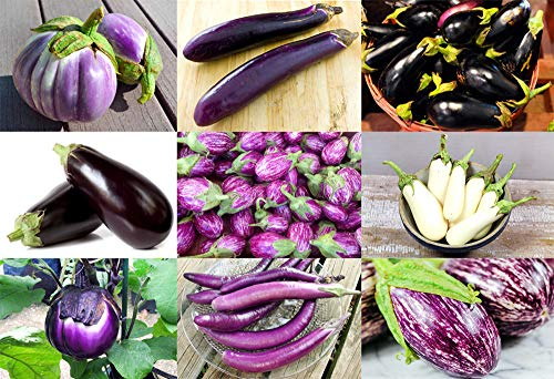- Please Read! This is A Mix!!! 30+ ORGANICALLY Grown Eggplant Mix Seeds 11 Varieties Heirloom Non-GMO Aubergine, Asian, European, Italian, Profilic, Super Delicious, from USA