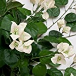 36in-Artificial-Bougainvillea-White-fire-Retardant