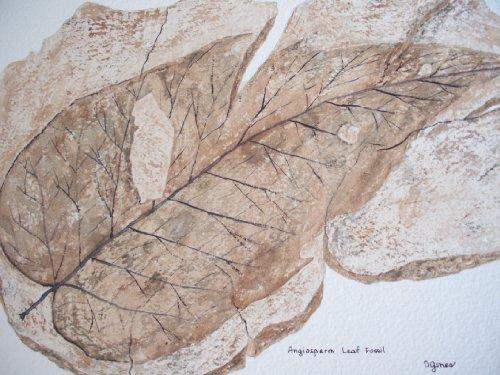 Angiosperm Leaf Fossil (Leaf Fossil)
