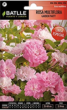 Semillas de Flores - Rosa Multiflora Garden Party - Batlle: Amazon ...