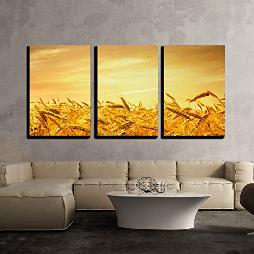 wall26 - 3 Piece Canvas Wall Art - Ripe Wheat at Sunset. Landscape. - Modern Home Decor Stretched and Framed Ready to Hang - 24