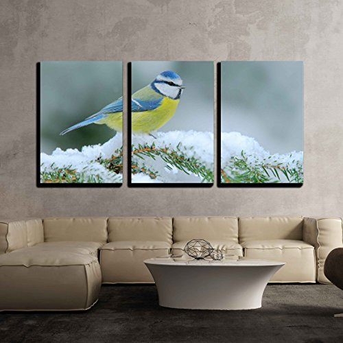 wall26 - 3 Piece Canvas Wall Art - Blue Tit, Cute Blue and Yellow Songbird in Winter Scene, Snow Flake - Modern Home Decor Stretched and Framed Ready to Hang - 24