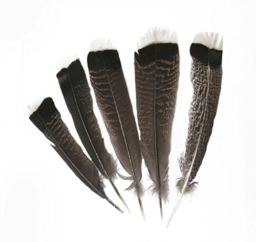Hgshow Imitation Eagle Feathers, 10 Pieces Turkey Pointers for sale  Delivered anywhere in USA