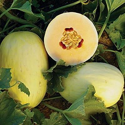 Crenshaw Melon Seeds - 10+ Rare Organic Non-GMO Heirloom Melon Seeds : Garden & Outdoor
