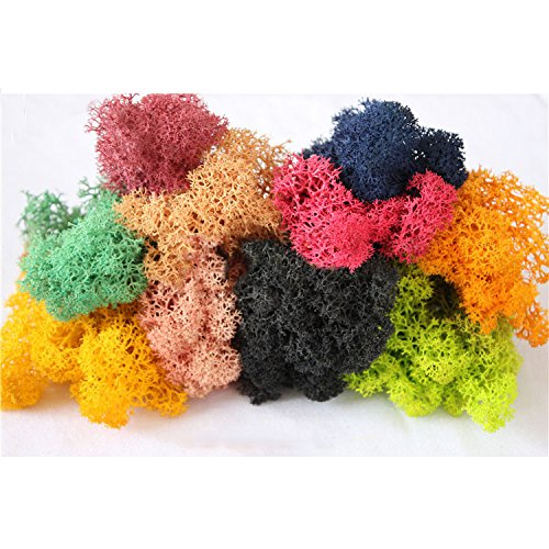 Peicees Mixed Color Reindeer Moss Preserved, 1.4OZ, Great for Dressing Potted Plants, Fairy Garden,Gift Packaging and Many other Crafts by Peicees
