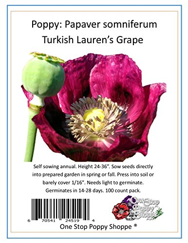 100 Poppy Seeds Lauren's Grape Turkish Papaver Somniferum. One Stop Poppy Shoppe® Brand.