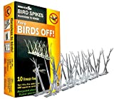 Bird-X SP-10-NR Plastic Narrow Bird Spikes 10 foot Kit with Adhesive Glue, (10 Pack)