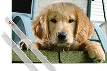 amazon ポスター犬ポスター sweet golden retriever puppy 36 x 24